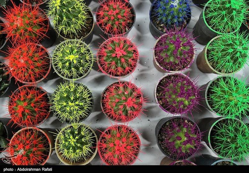 کشفی دیگر از خواص گیاهان دارویی