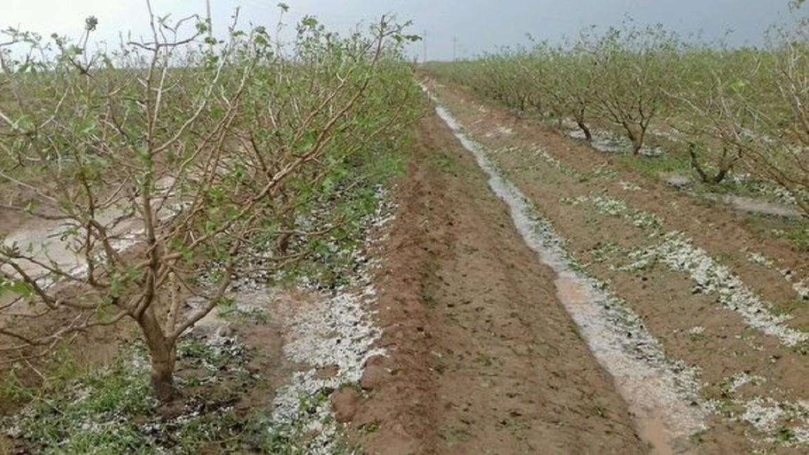 خسارت 158 میلیارد تومانی تگرگ به باغ ها و مزارع مه ولات