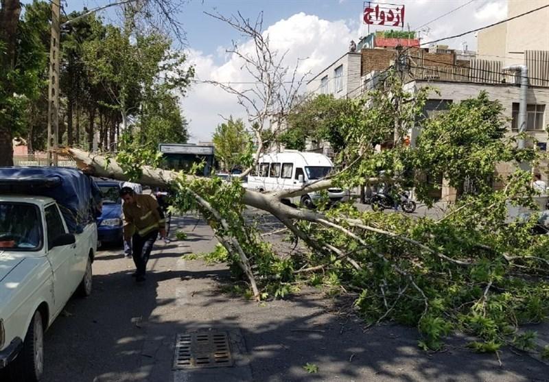 وزش باد شدید منجر به شکسته شدن و سقوط درخت شد