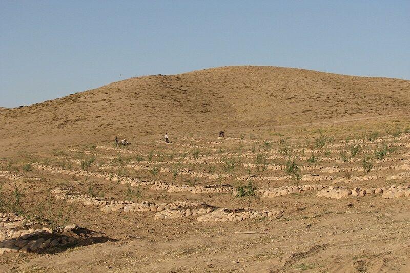خبرنگاران طرح توسعه باغ و کشت گیاهان دارویی در 253 هکتار از اراضی قزوین اجرا شد