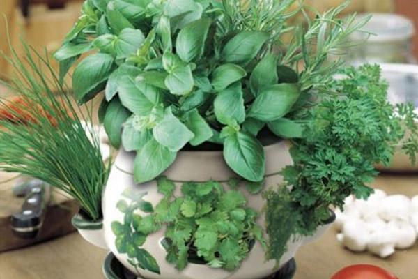 روش کاشت سبزی خوردن در گلدان