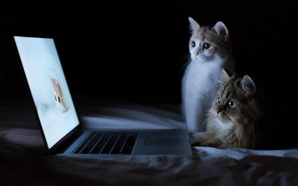 مجموعه عکس گربه ناز برای پروفایل و بک گراند گوشی