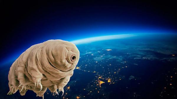 اسپیس ایکس خرس های آبی را به فضا می برد